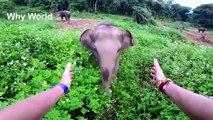 ELEPHANTS – Funny Elephant Videos – Cute Baby Elephants Video – Funny Elephants