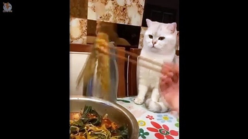 Cat's Hilarious Reaction To Food  Funny and Cute Cats Compilation 2020 - Cute animals