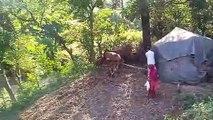 desi life  natural life,village life,wild life,himachal life