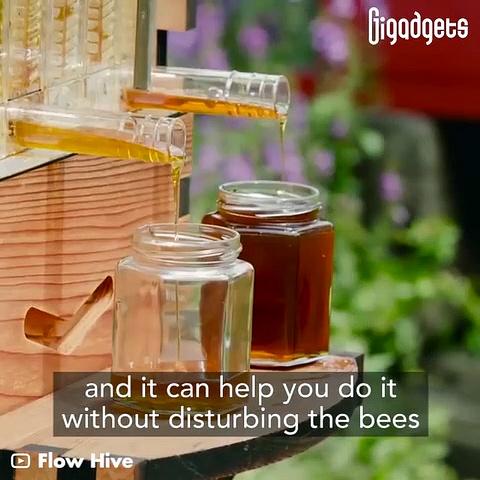 Flow Hive makes beekeeping easier