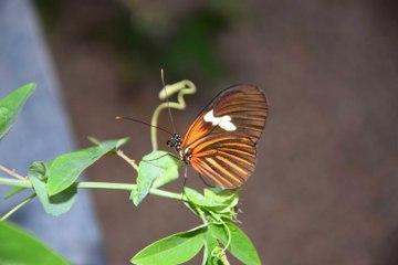 Les papillons quittent leur cocon au musée d'Histoire naturelle de Tournai