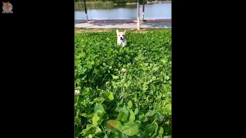 Cute Puppies Doing Funny Things 2020  #4 - Cute  animals