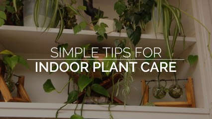 Simple Tips for Indoor Plant Care