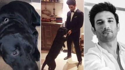 Sushant Singh's DOG FUDGE Crying for Him ! Emotional Pet Video