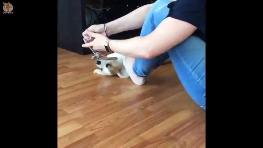 Cute Puppies Doing Funny Things 2019  #2 - Cute VN
