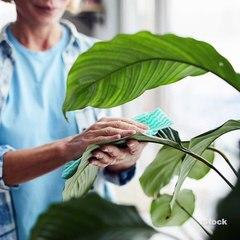 Aprende a limpiar las hojas de tus plantas