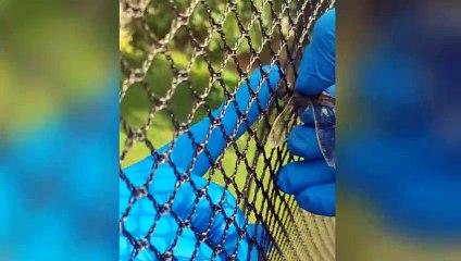 Un homme libère une libellule prise dans un filet !