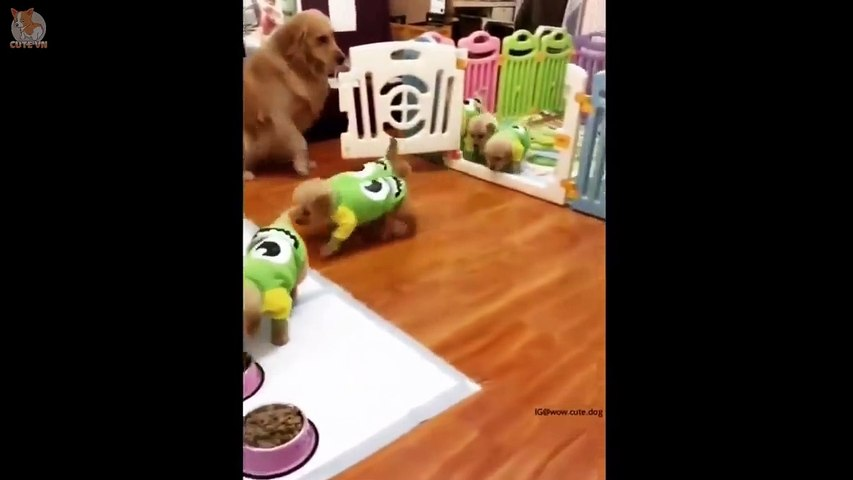 Cute Puppies Doing Funny Things 2019  #1 - Cute VN