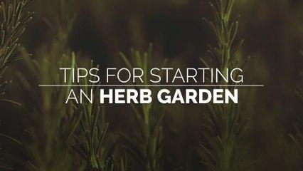 Tips for Starting an Herb Garden