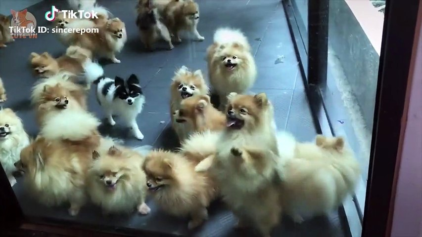 Aww - Funny and Cute Dog and Cat Compilation 2019 #9 - CuteVN