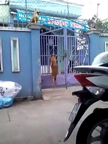 Un chien escalade un portail