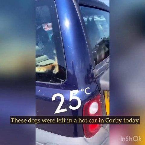 Corby German Shepherd incident
