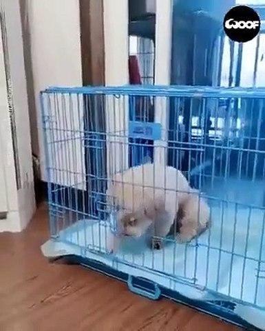 Ce chien intelligent sait gérer la canicule