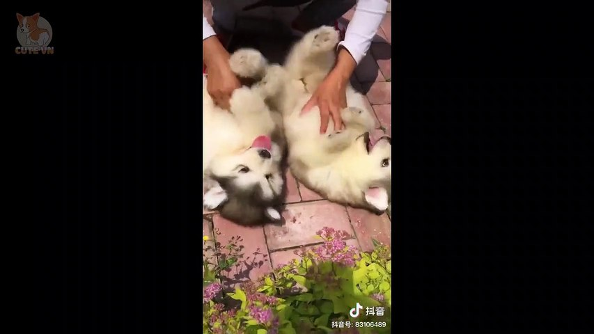 Aww - Cute Dog and Cat Compilation 2019 #4 - CuteVN