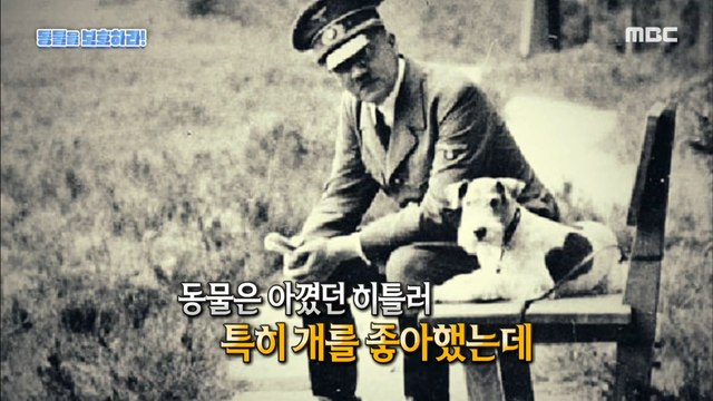 [HOT] Hitler created the first animal protection law?! 서프라이즈 20200628