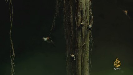 براري المكسيك - 1 غابات المايا