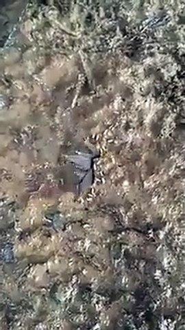 Des milliers d'insecte sortent de ce trou... terrifiant