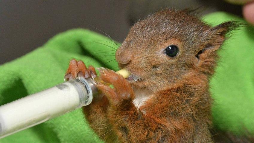 Comment s'appelle le petit de l'écureuil, du phoque, de la grenouille? Faite le test...