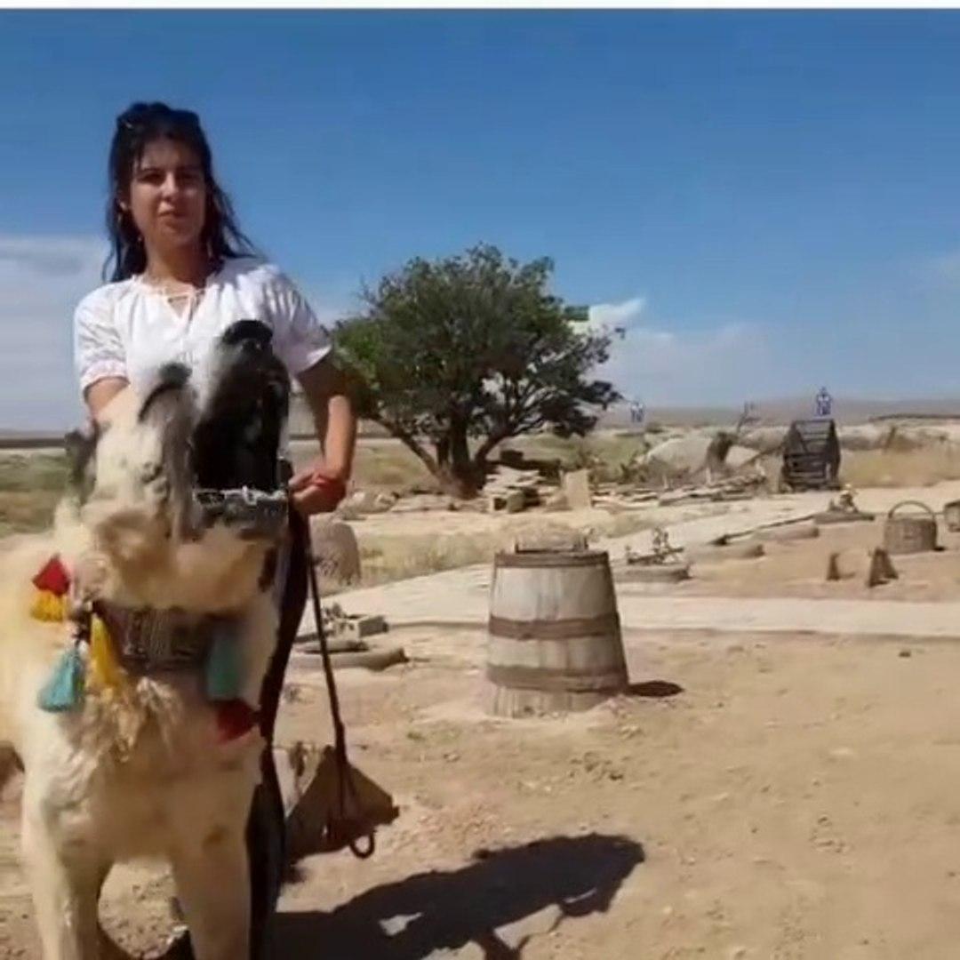 ADAMCI DEV ALA COBAN KOPEGi - ANGRY GiANT ALA SHEPHERD DOG