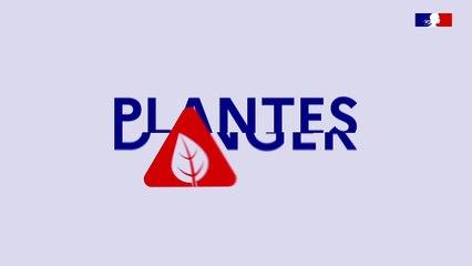 Animation : Xylella, plantes en danger