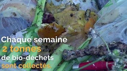 Collecte des bio-déchets et tri du verre, le Pays de Grasse, pionnier dans la réduction des déchets