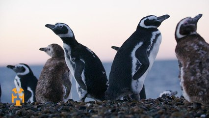 Penguin Conservation in Patagonia