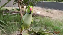 Parrots Happy to be Outdoors