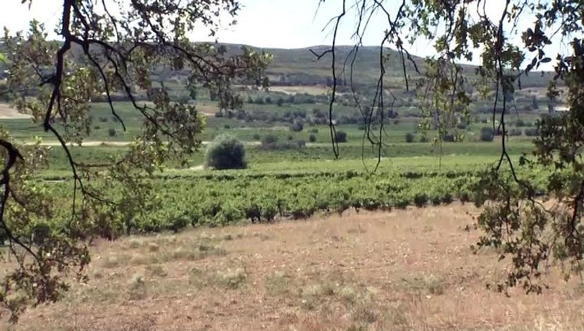Αρκετές εκτάσεις της Βοιωτίας καλλιεργούν βιολογικά προϊόντα