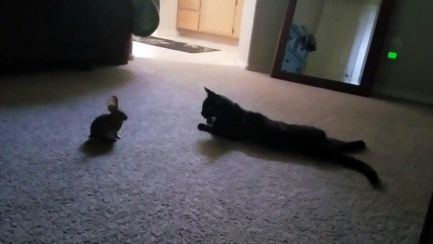 Ce chat a remmené un copain à la maison