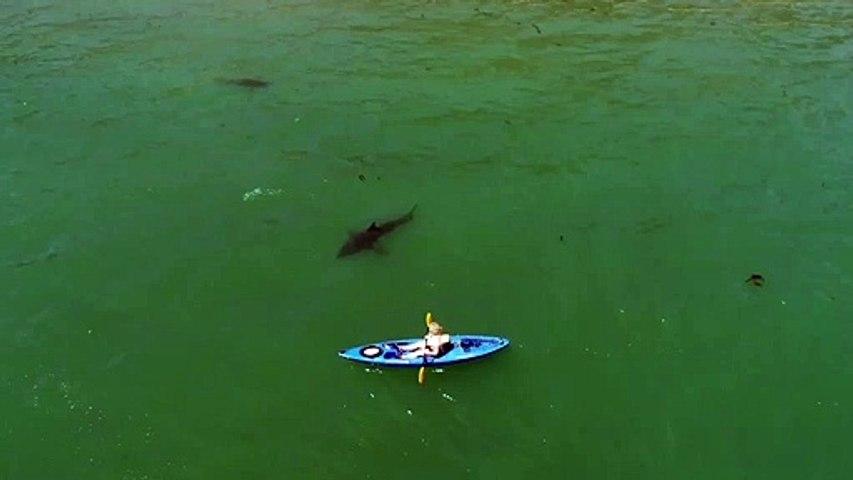 Ce touriste en kayak est suivi par un requin