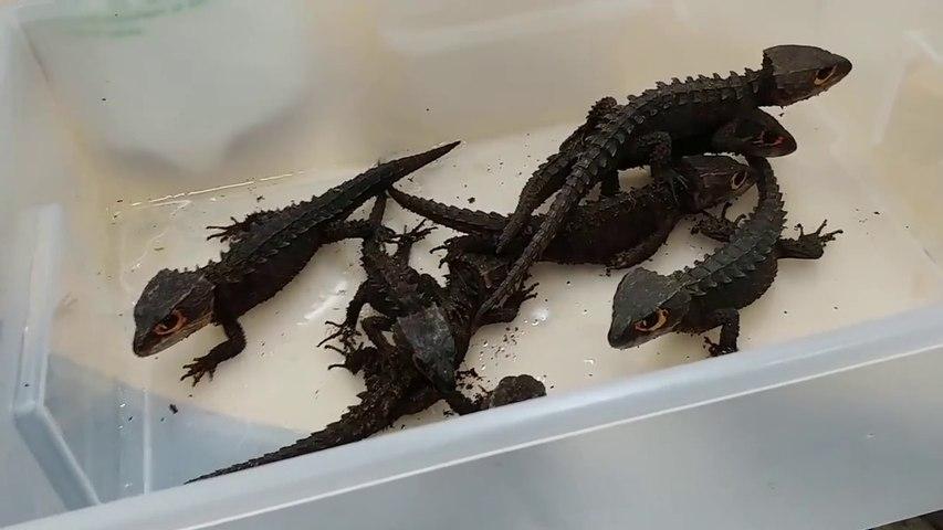 Non ce ne sont pas des dragons... Et pourtant