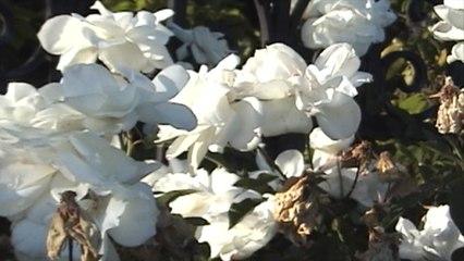 Donna Missal - Bloom
