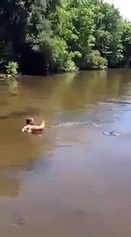 Il nage avec les crocodiles... Même pas peur
