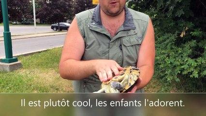 Turtle_FR