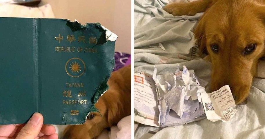En faisant cette grosse bêtise, ce chien a peut-être sauvé la vie de sa maîtresse