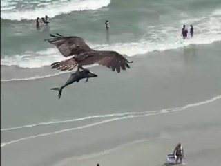 Sharknado In Now Real Life : Bird Carries a Shark in Viral Video !