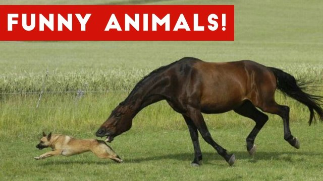 Funniest Pet & Animal Clips, Bloopers & Moments Caught On Tape Weekly Compilation _ Funny Pet Videos