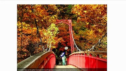Nature Tours in Hokkaido Japan NOW!