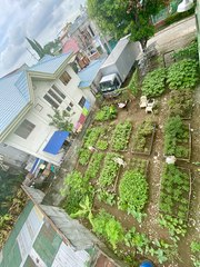 How This Community in Quezon City Transformed an Idle Lot Into an Urban Garden