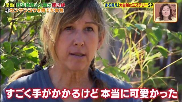 世界まる見え!テレビ特捜部  2020年7月6日 2時間SP 自然ミステリーSP!-(edit 2/2)