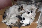 Mahsur kalan yavru kedi kurtarıldı, annesine kavuşturdu