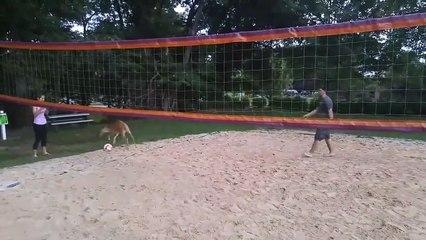 Cette biche a très envie de jouer au beach-volley