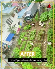 Community in QC transformed idle lot into an urban garden