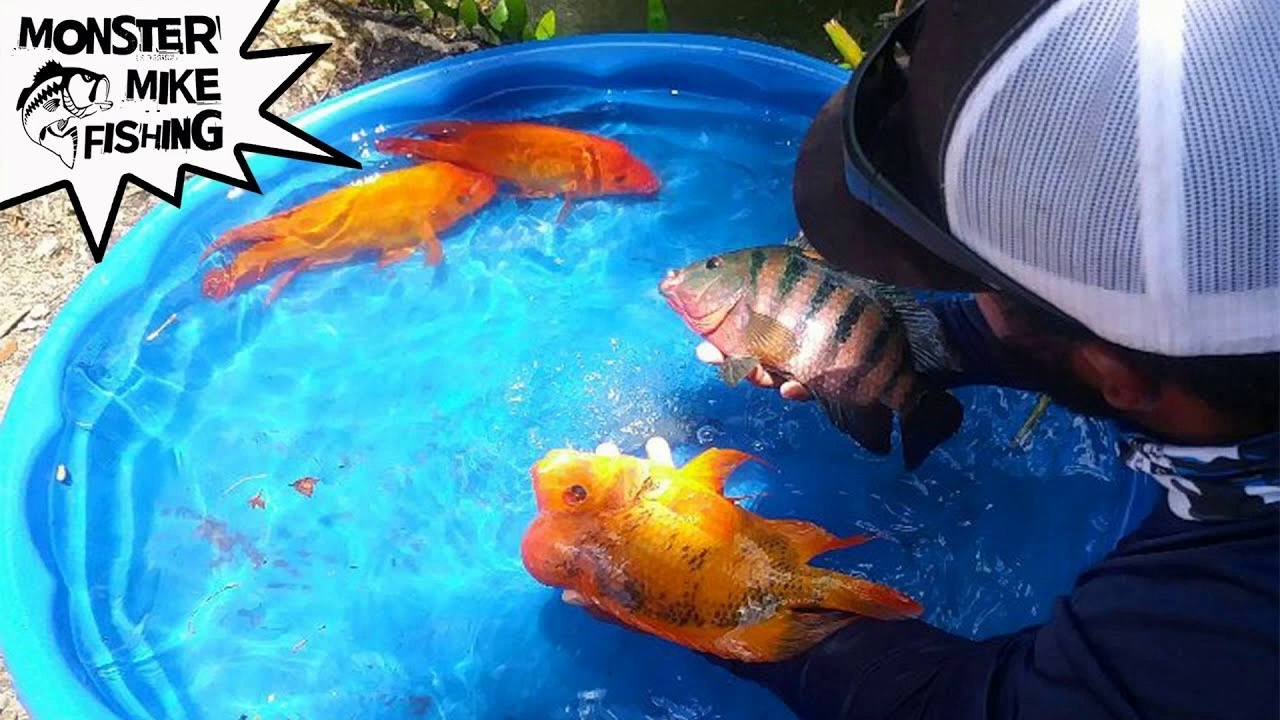 DIY Fish Pool Pond!