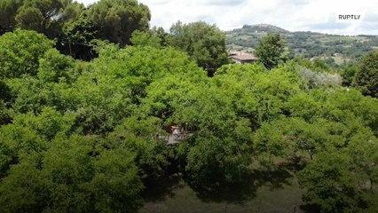 إيطاليا: مطعم فوق الشجر !!!