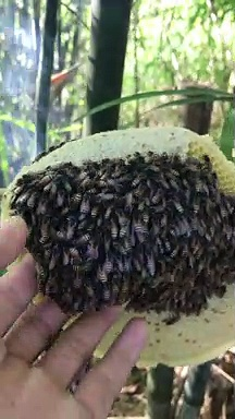 Handful of Honey Bees