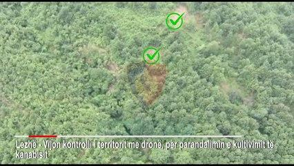 Kontroll masiv i territorit për kanabis, zbulohen bimë në Delvinë e Kurbin - Vizion Plus