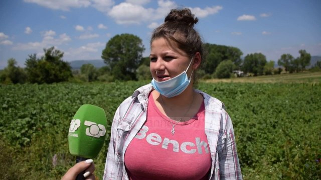 Bujqësi me bimët mjekësore/ Historia e të rinjve të Kolonjës që i kthehen tokës dhe gjejnë punësim