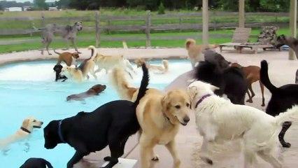 Ces chiens ont organisé une pool party et s'amusent commes des fous