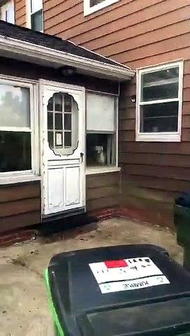 Un chien de garde très efficace